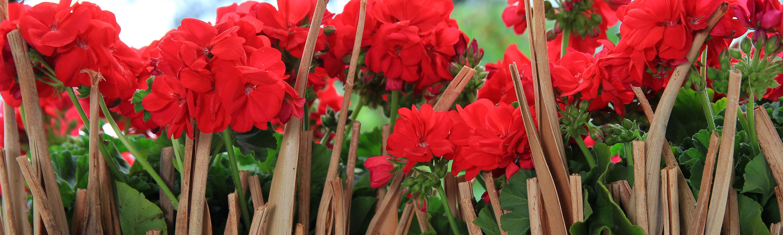 Schweizerischer Floristenverband